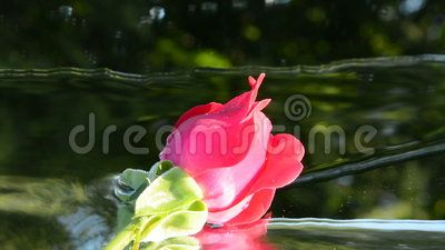 A red rose reflected on a green background with water flowing continuously in a summer day.