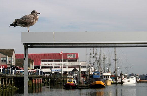 Smarter Travel picks Steveston as one of its worldwide fantastic fishing villages