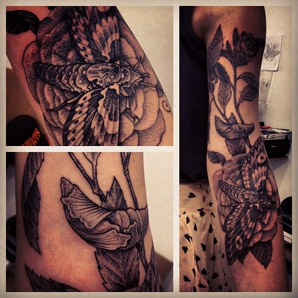 17 Best Images About Tattoos On Pinterest: 17 Best Images About Hawk Moth Tattoo On Pinterest