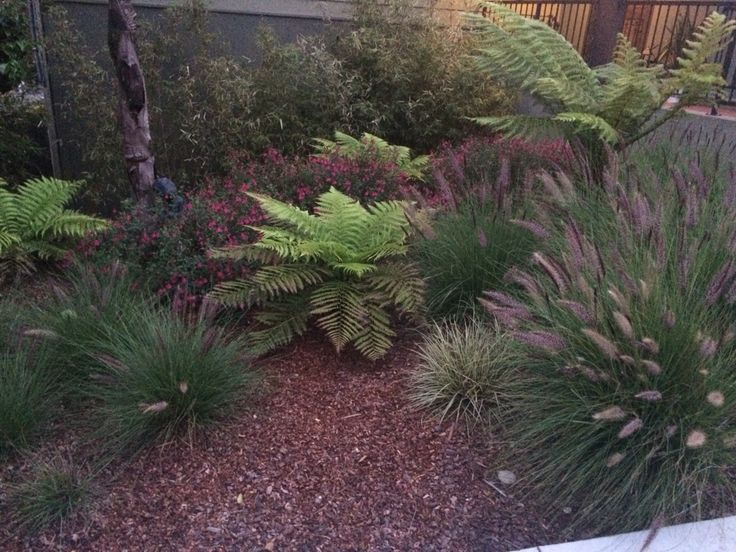 17 best images about zen urban garden on pinterest for Best low maintenance plants for shade