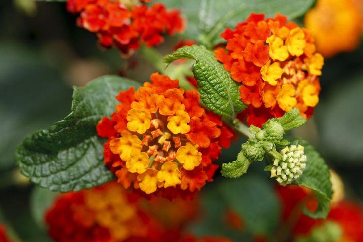 21 Best Plants Flowers I Like Images On Pinterest