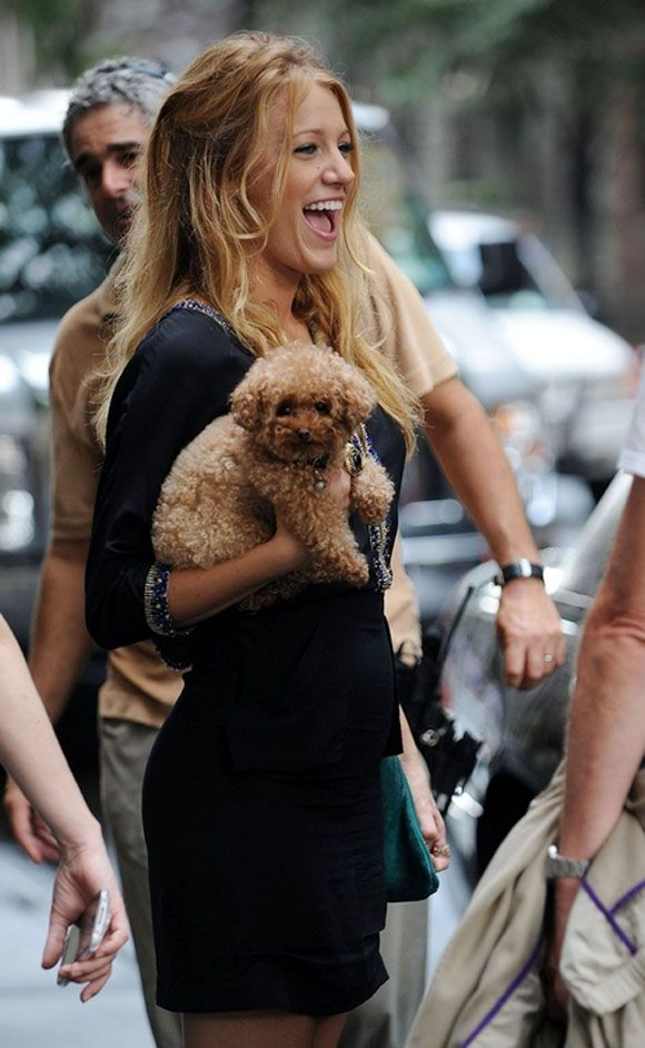 Blake Lively's dog, a maltipoo (mix Maltese and Poodle)