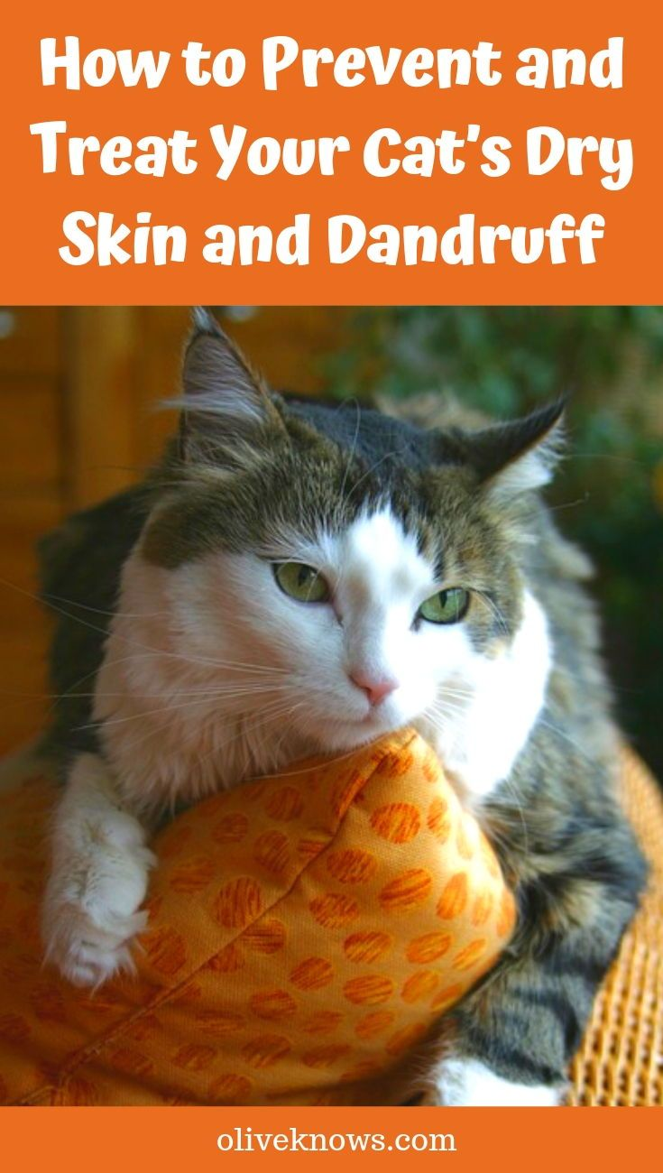 How To Prevent And Treat Your Cat S Dry Skin And Dandruff Oliveknows In 2020 Cat Dandruff Cat Skin Sick Cat