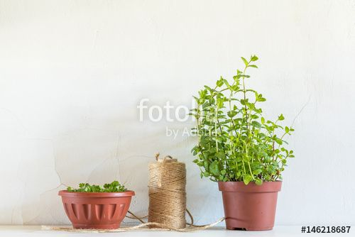 """Download the royalty-free photo """"Spring gardening light concept"""" created by Victoria Kondysenko at the lowest price on Fotolia.com. Browse our cheap image bank online to find the perfect stock photo for your marketing projects!"""