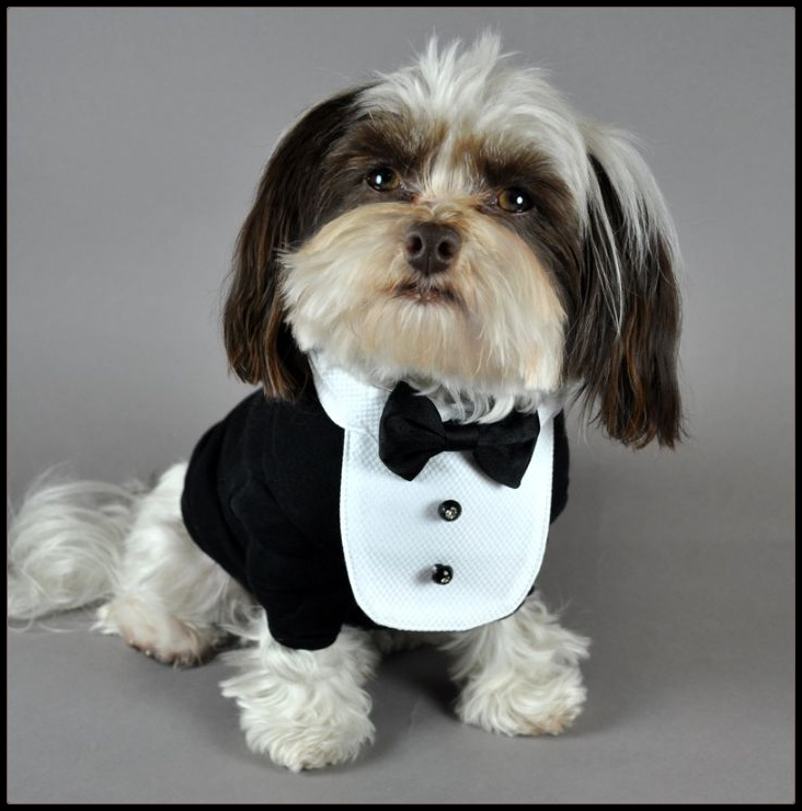 Homer's outfit for the Wedding... Him and Griffin will walk together! - Best 20+ Dog Wedding Outfits Ideas On Pinterest Dog Wedding, Boy