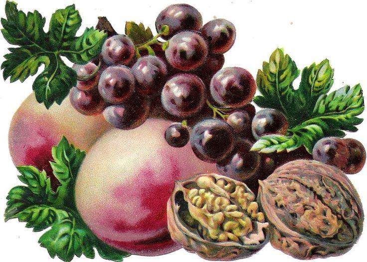 Oblaten Glanzbild scrap die cut chromo Obst 14,5cm Nuss nut grapes peach  Frucht