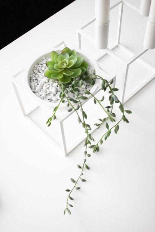 Small plants in a Kubus bowl (By Lassen) http://www.nordicblends.nl/nl/producten/by-lassen/p-1-2/bylassen-schaal-klein-zwart.html