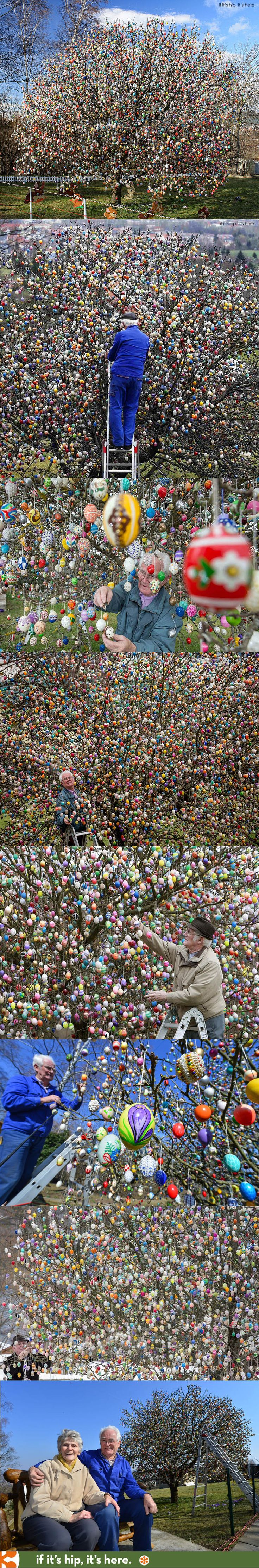 The Easter Egg Tree. This German Couple has been decorating their apple tree with up to 10,000 eggs for the past 50 years. 2015 is the last year they will honor this old tradition. Learn more at http://www.ifitshipitshere.com/2015-volker-kraft-easter-egg-tree/