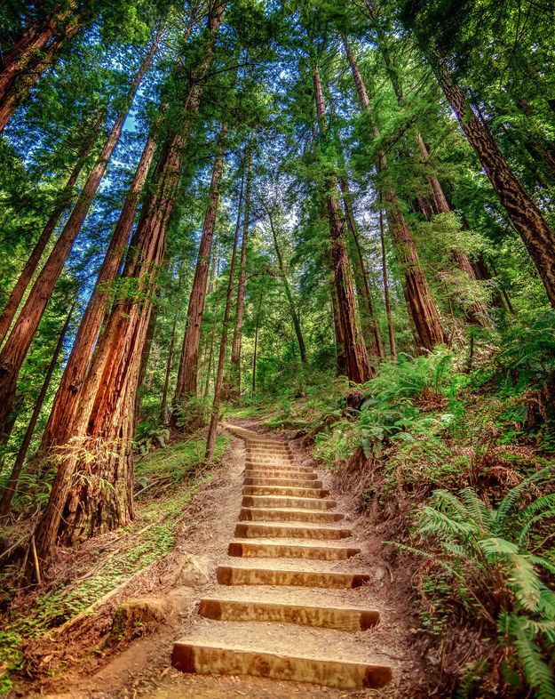 Visit a rainforest in Muir Woods. | The giant redwoods located in Muir Woods National Monument are part of the Pacific Temperate Rainforest's ecosystem, which is home to some of the oldest trees in the world.