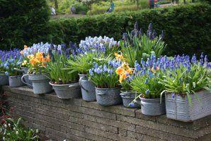 Most ültessük a tavaszi hagymásokat!