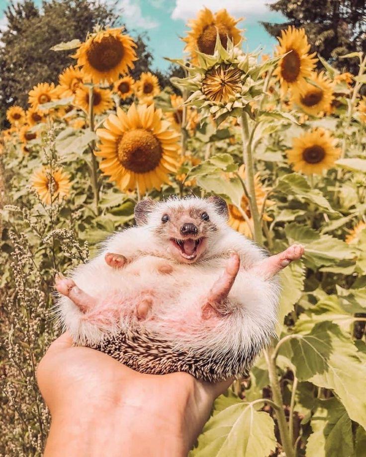 Фото позитив животных про настроение
