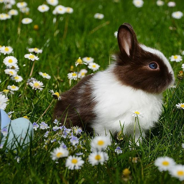 Take me to a field of baby bunnies please