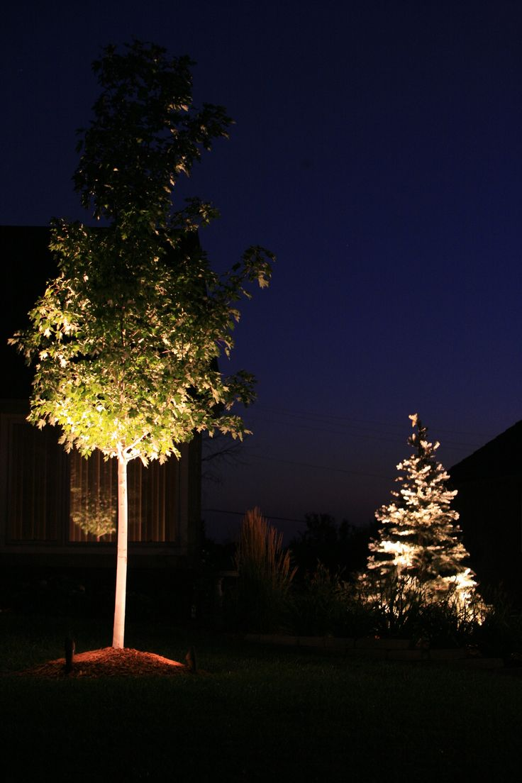 1000 images about nightscaping outdoor lighting on for Outdoor lighting uplight