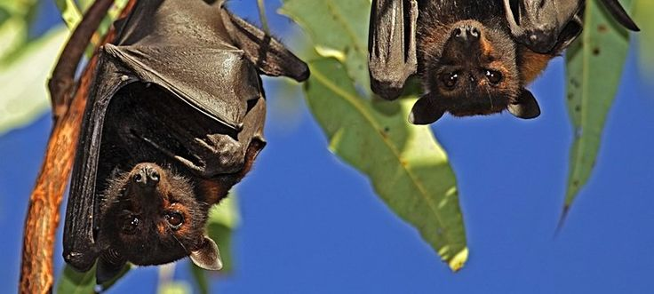 25 Interesting Facts about Bats