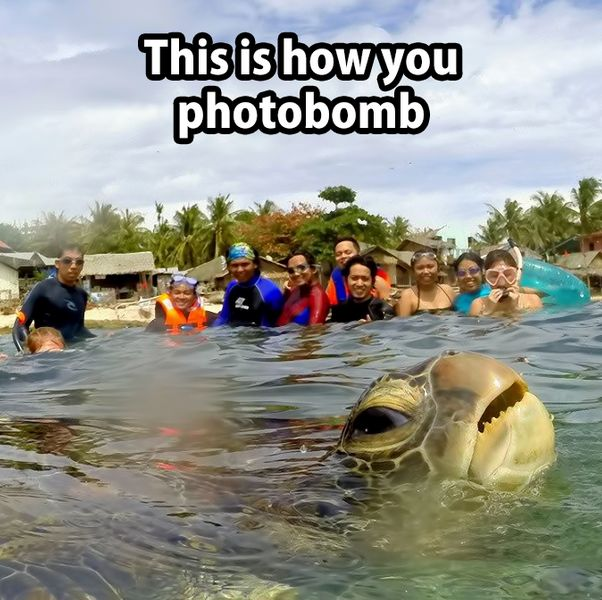 Good grief! Turtles can't take selfies any more without being photo bombed! Its a shame!