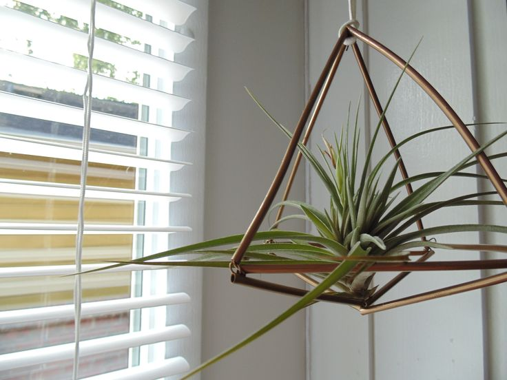 If you're like me and love plants but always forget to water them (and they inevitably die), this is the perfect plant for you. They're called Airplants. Their scientific name is Tillandsia(yes, I googled that) and there's over 650 different …