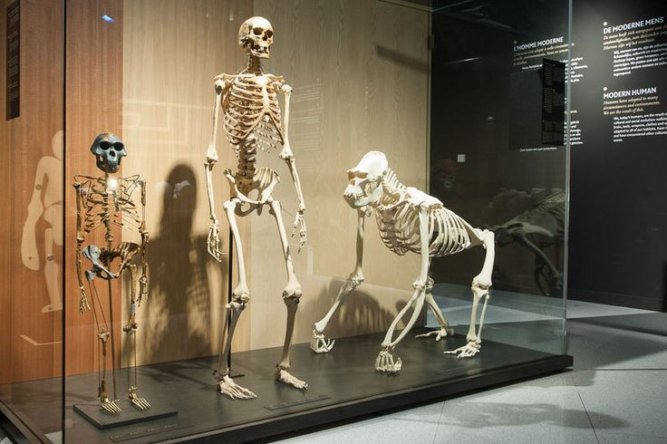 En images: la  nouvelle Galerie de l'Homme du Musée des sciences naturelles