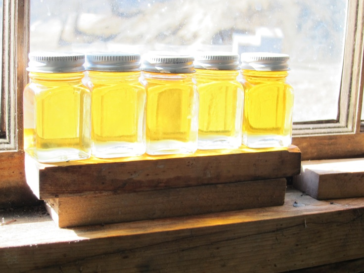 Fresh maple syrup samples