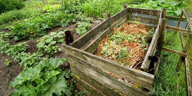 Paul's tips for starting a compost