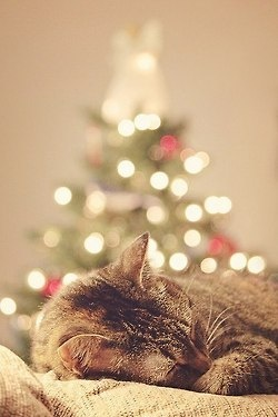 Sleepy kitty with out of focus Christmas tree in the background