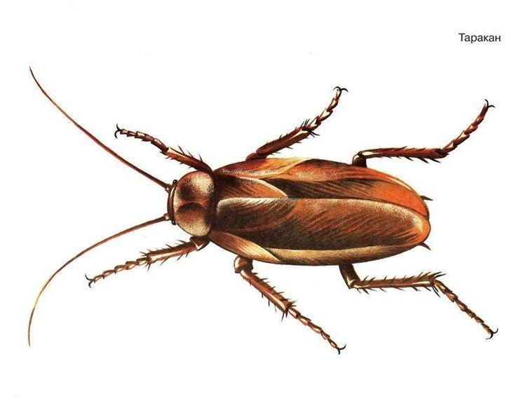 Дезинсекция, дератизация  Самара  Качественная, профессиональная, надежная дезинсекция дератизация производится специалистами нашей компании. Если у вас завелся таракан, уничтожение его нужно срочно, требуется уничтожение муравьев, появились мыши, крысы, комары, клопы, осы и другие нежеланные гости, то устранить их помогут наши мастера.