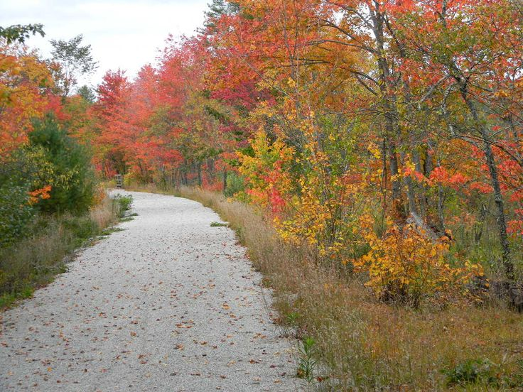 10/02/2015 On the Northern Rail Trail between Danbury and Grafton NH...