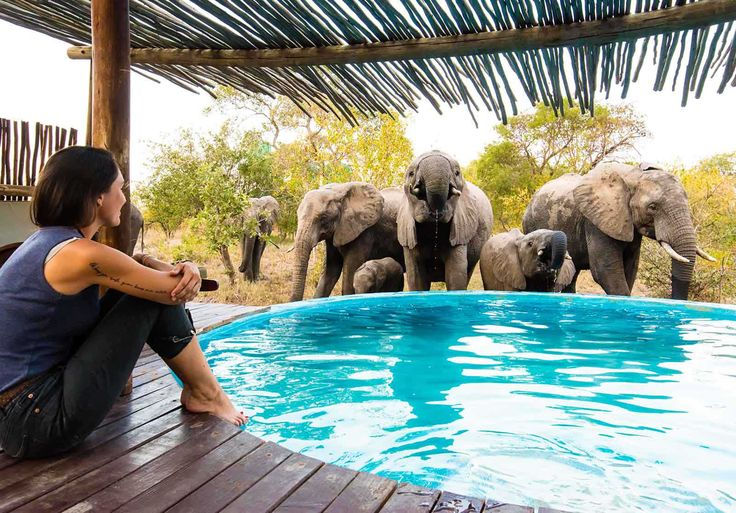 Sharing is caring! When water sources are scarce, your plunge pool could become very popular!  #Elephants #BigFive #SafariLodge #PlungePool
