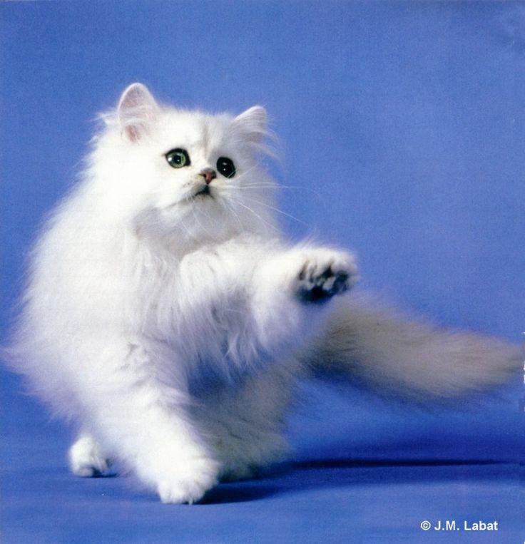 Fonds décran Chats chatons gratuits