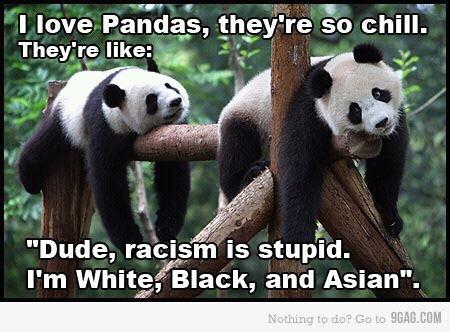 Haha YES! I love Pandas:): Quote, Coon Bears, Giggles, Pandas Bears, Funny Stuff, Hilarious, Giant Pandas, Smile, Animal
