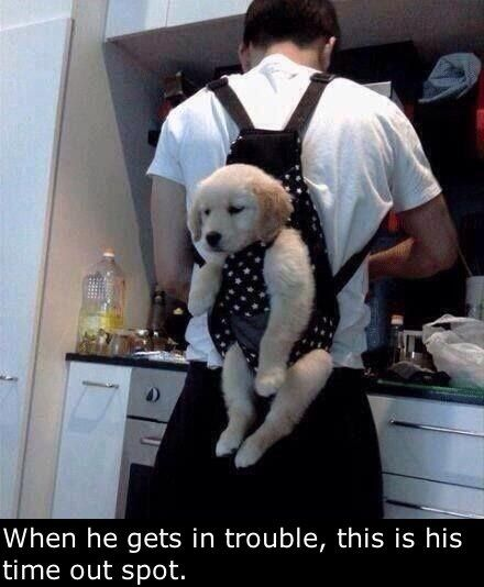 Another Use For That Baby Carrier. i've always wanted to do this! it would have to be a bit bigger carrier though