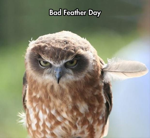 bad feather day