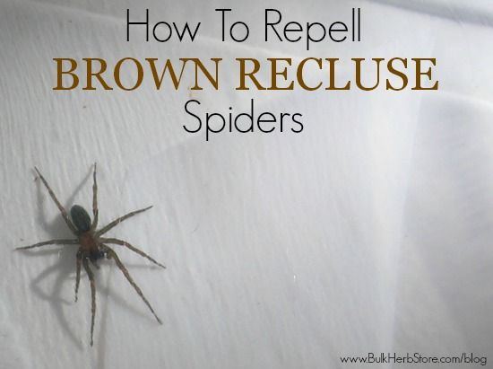 Use certain essential oils to keep spiders away! Good info. Photo Credit: larryrrr via Compfight cc  http://www.bulkherbstore.com/blog/2013/08/how-to-keep-brown-recluses-away
