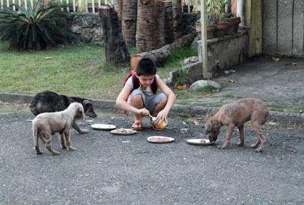 """Criança que alimenta cães de rua cria Ong http://r7.com/xWal (via Patas ao Alto)  """"Quero salvar cães que podem ser mortos sem motivo, mas eu ainda alimento cães magros na rua quando os vejo""""  He feeds street dogs. Congrats to him."""
