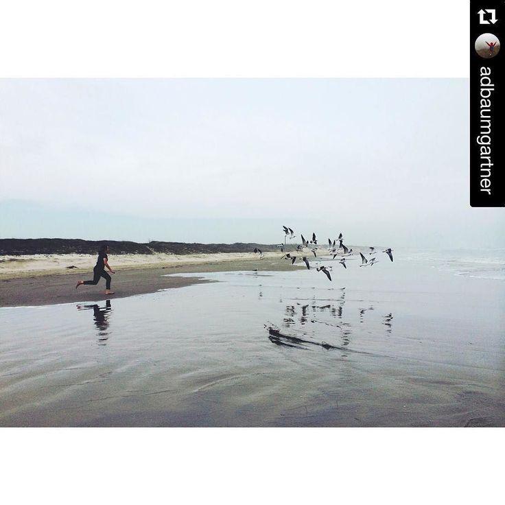 Mustang Island Beach: Free Like The Birds In #PortAransas. Http://ift.tt/1M0jTQ3