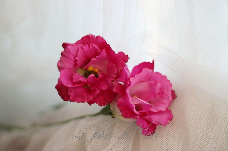 Lissianthus dark pink