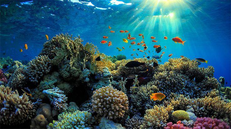 Webtekno ///  Dünya Denizlerinin Yaşam Kaynağı Yok Oluyor: Büyük Bariyer Resifi Ölüyor!