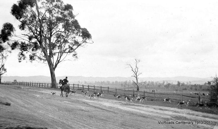1915 Horse and hounds near Lederderg River. Bacchus Marsh. VicRoads Centenary 1913-2013.