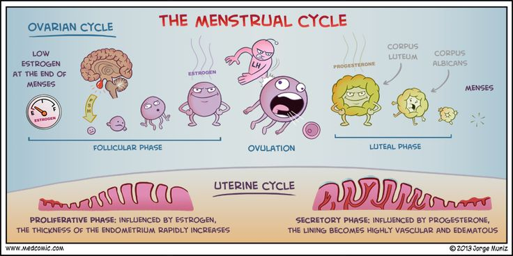 endometriosis menstrual cycle and staff Trusted endometriosis specialist serving richland hills, tx  entering  menopause at a late age, having short menstrual cycles (eg less than 27 days),  having.