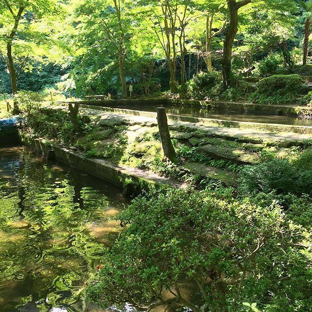 【megrin0620】さんのInstagramをピンしています。 《#ig_japan#instapic#instagood#instatravel#japan#ibaraki#fishingpole#fishing#rainbowtrout#landlockedsalmon#forest#tree#green#nature#naturelovers#sunshine#summer#vacation #夏休み#釣り堀#増渕魚園#山女魚#ニジマス#釣り#森#緑#木漏れ日#自然#地元 増渕魚園さん 釣った魚はお刺身か塩焼きにしてくれます🐟 他に旬の季節の山菜料理がついてきます 山の中だけど1時間は待ちました》