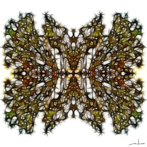 KIng Of Moths  Digital Artwork over original photo 50 x 50 cm  rcn