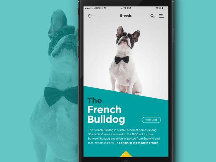iOS Breed info screen by Ruben Oliveira