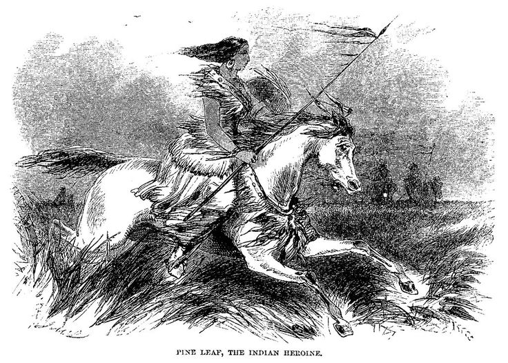 Photo Credit: Illustration of Pine Leaf in James Beckwourth's 1856 memoir.