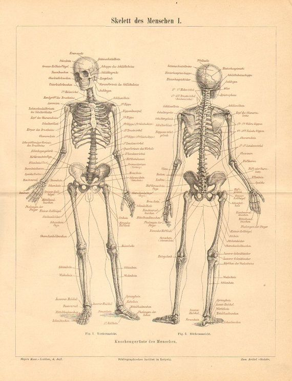 68 best images about // anatomy on pinterest | bone jewelry, human, Skeleton