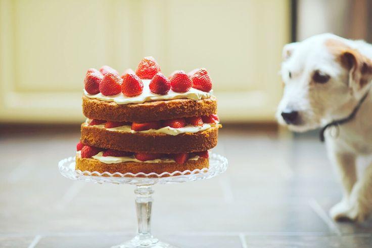 È venerdì sera. Mangiatelo quel pezzo di torta! 😊 buon weekend a tutti! 🔝😋 #unanerdincucina #friday #weekend #venerdi #picoftheday #foodporn #instafood #foodie #foodgasm #foodstagram #foodpics #foodpic #foodphotography #foodlover #food #eatingfortheinsta #chefmode #hungry #yummy