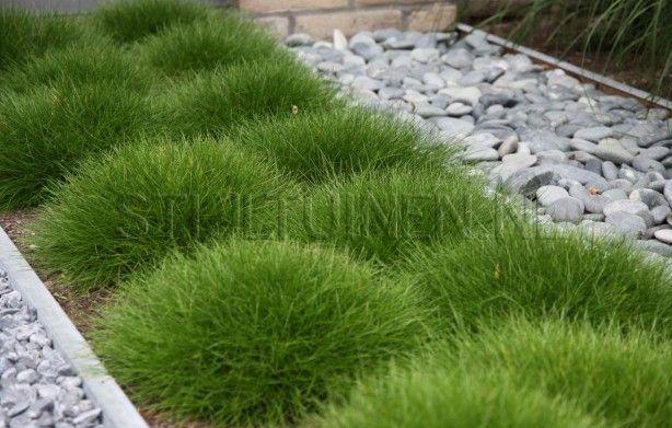leuk voor in de voortuin, gras met grind
