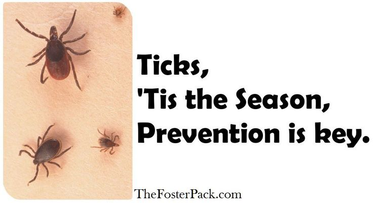 It's that time of year again folks. The weather is warming up and the ticks are coming out to play. I hate to use chemical flea and tick treatments on my dogs. I've heard way too many stories about the spot on preventative treatments causing terrible things to happen to dogs. Seizures, sickness, skin problems …