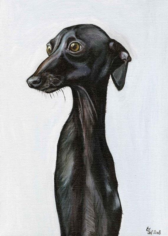 Unsurely  Italian Greyhound Dog Print  5 x 7 by AlmostAnAngel66, £15.00
