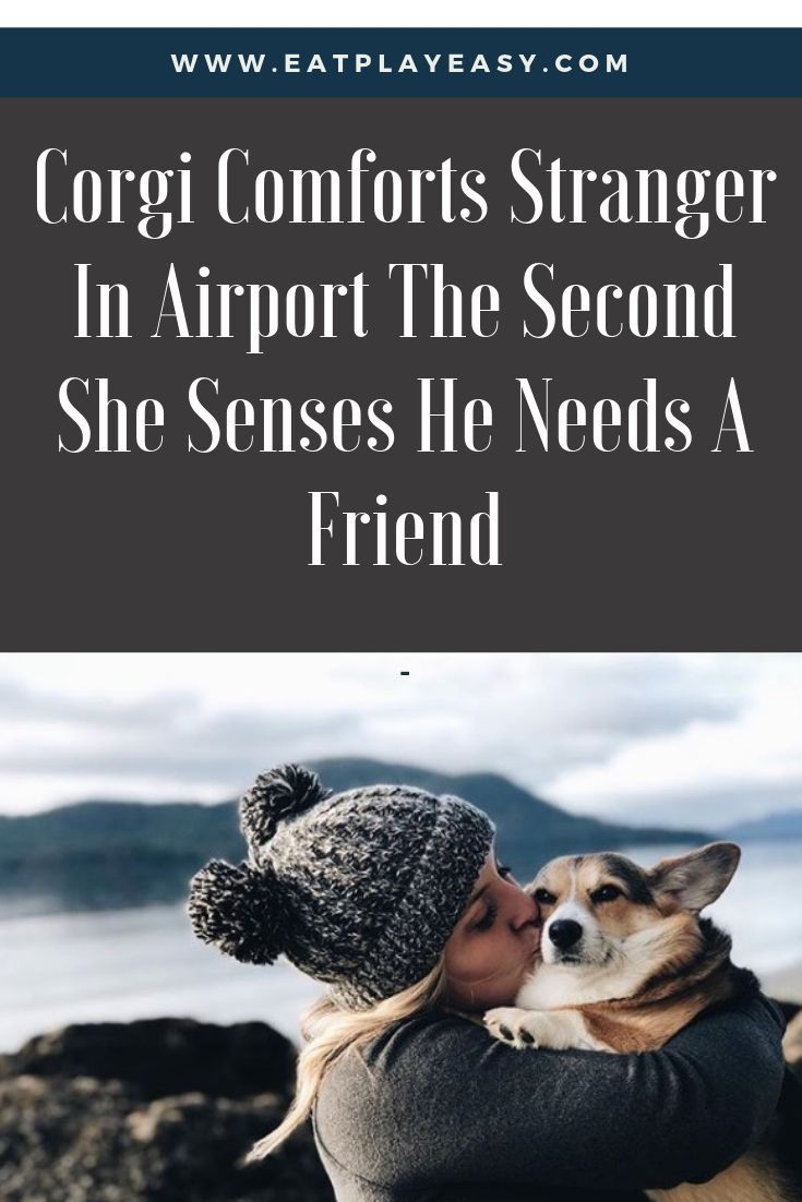 Madison Palm Knows Her Dog Cora Has A Special Talent For Sensing When Someone Needs Comforting But Even She Was Surprised And Touched Dog Lovers Corgi She Dog