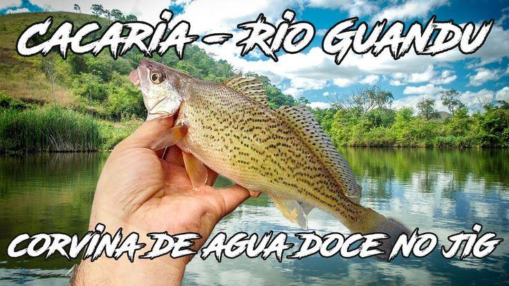 corvina de agua doce em cacaria pescada com jig - Rio Guandu - Pesca com...