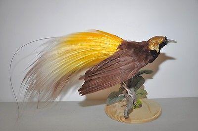 Rare Birds Of Paradise Rare Bird Of Pa...